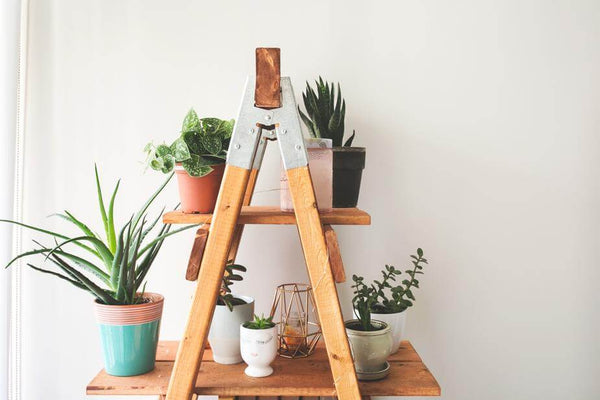ic: Indoor plants in cute pots displayed on a ladder shelf.