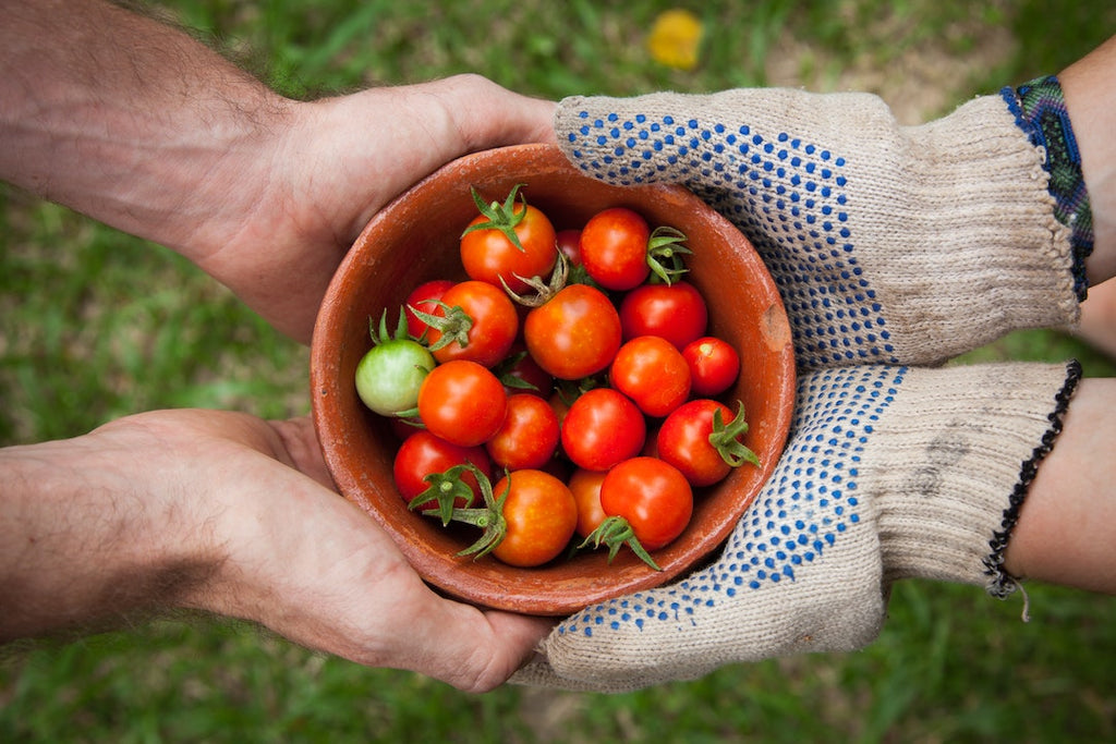 Growing Your Own Food, Tomatoes