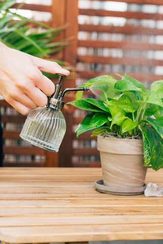 Ways to water your houseplants