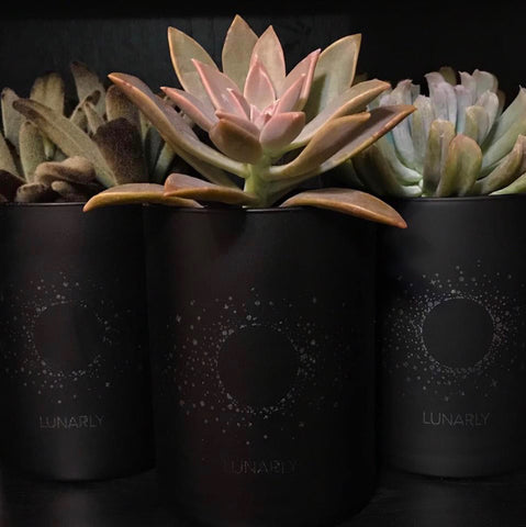 Lunarly candles repurposed into plant pots