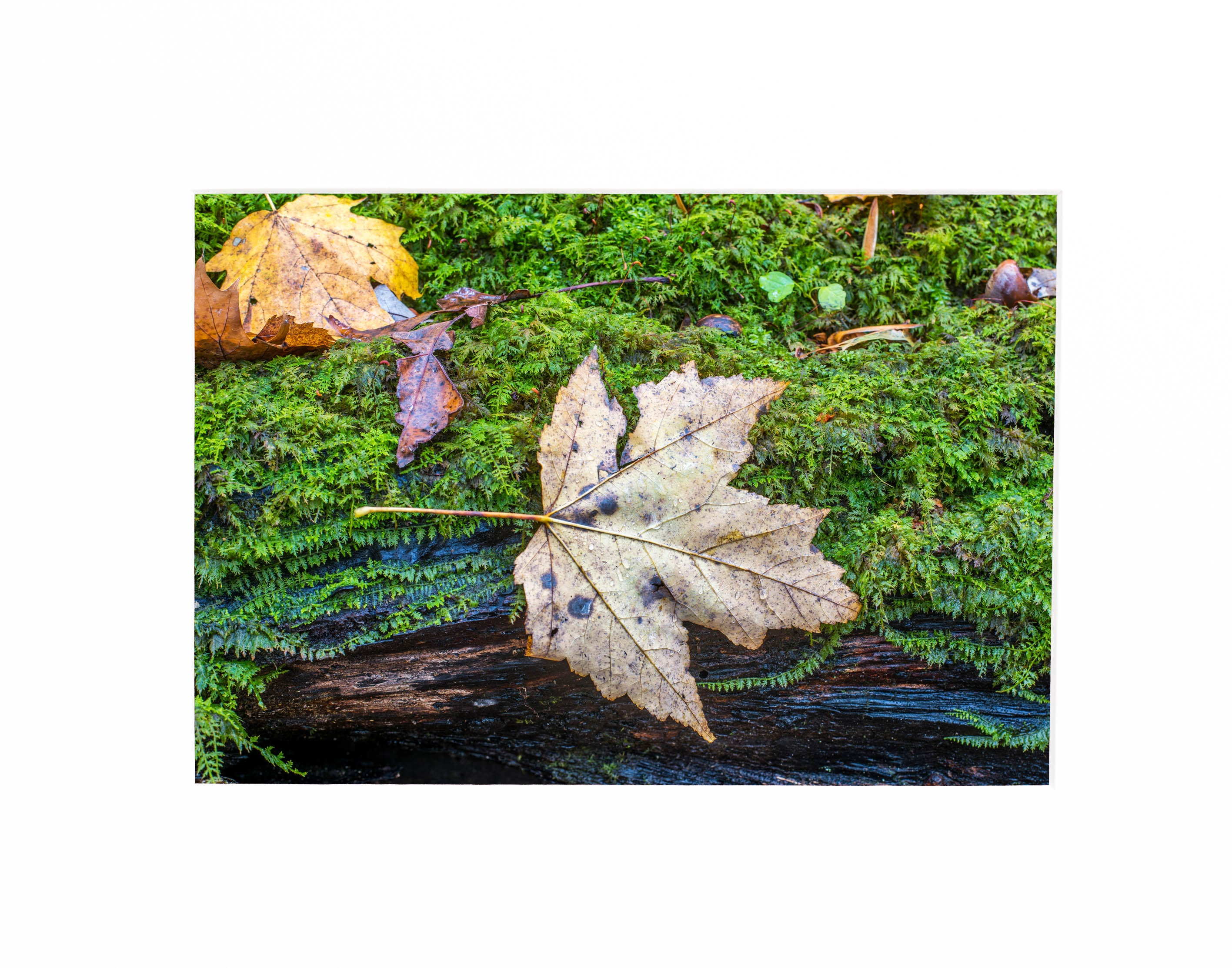 Fall in contrast matted print