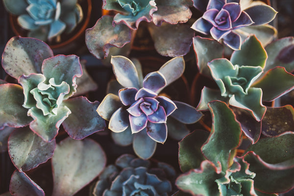 mindful succulents
