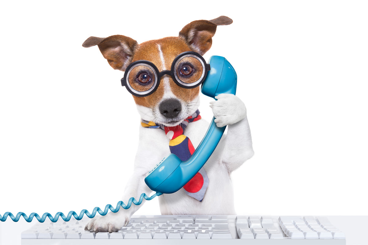 Jack Russell on the Phone and Computer for Style Hound Australia