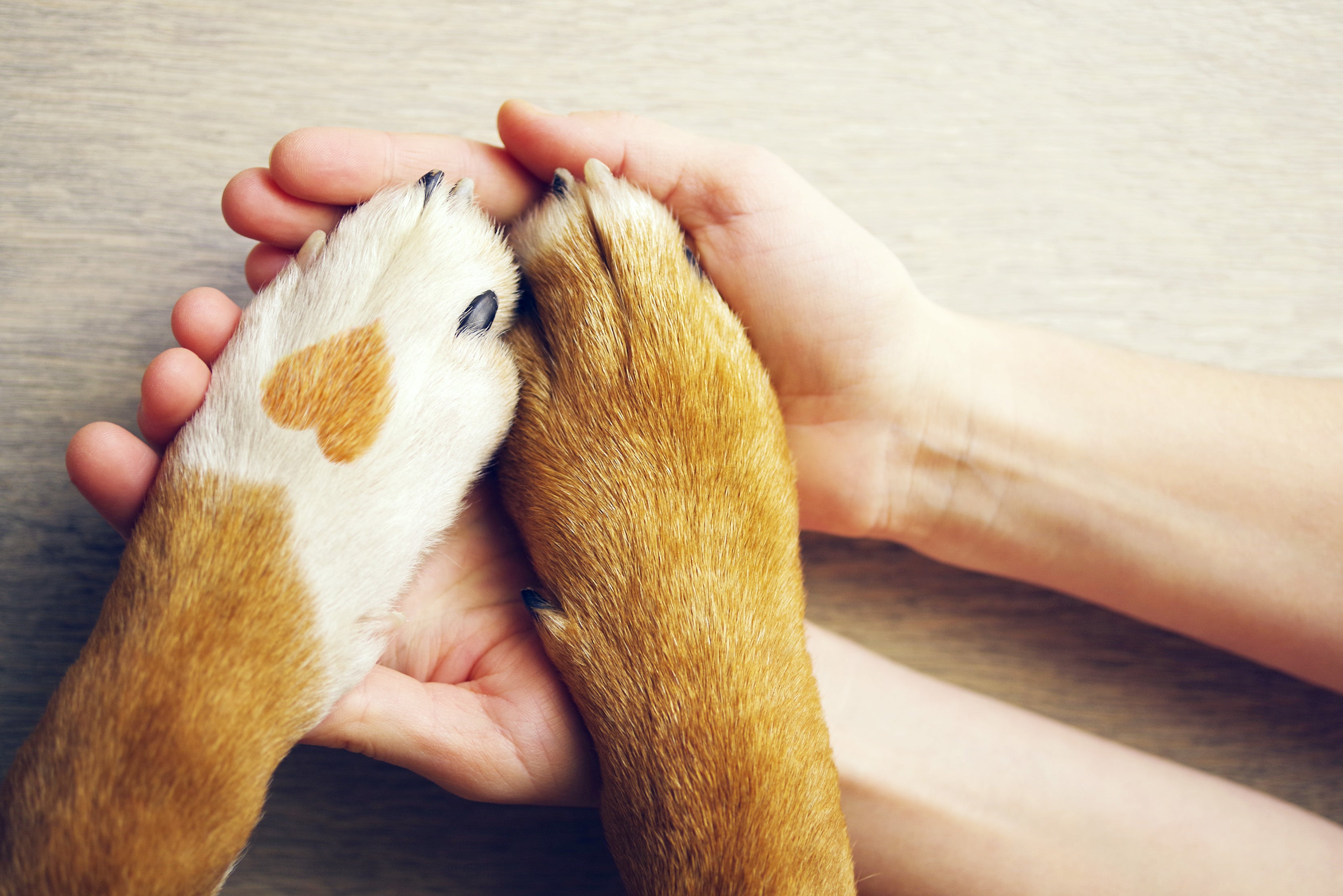8 Ways to Protect Your Dog's Paws