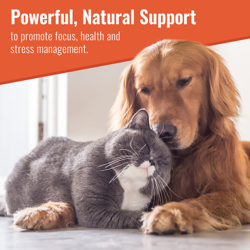 Canine Matrix Zen provides powerful, natural support to promote focus, health and stress management for your dog or cat.