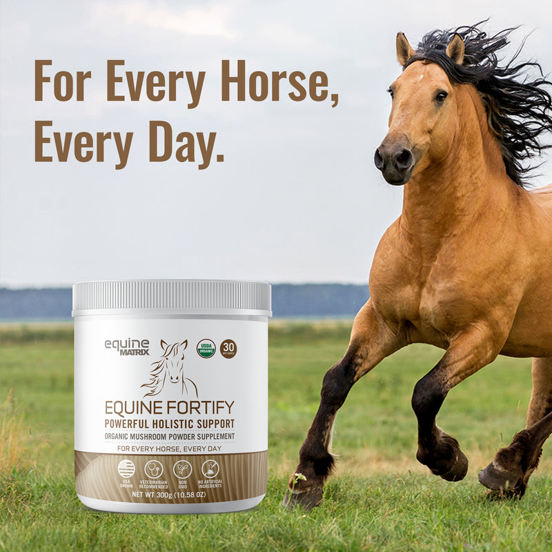 Equine Fortify - 30 Servings of Turkey Tail for Horses