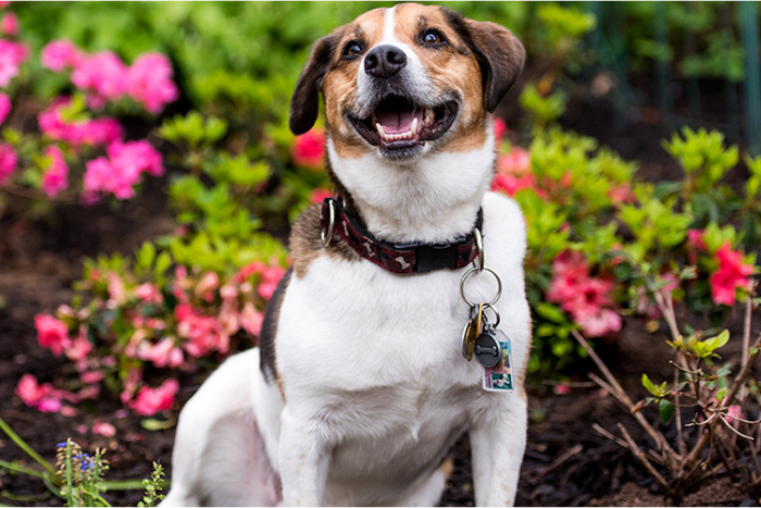 Keeping Your Springtime Garden Safe for Your Pets