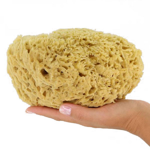Natural Sponge Wood Medium