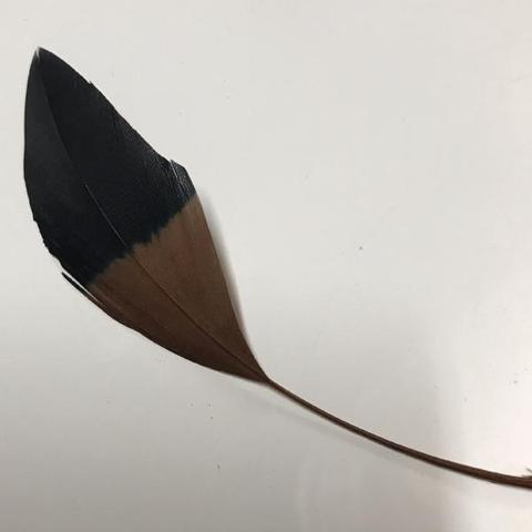 Two Tone Stiff Goose Feathers  - AU - B Unique Millinery