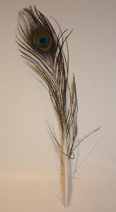 Natural Peacock Eye Feather (25-30cm) - AU - B Unique Millinery