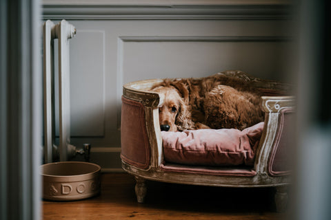 Bruce the dog in his bed at Thorpe Manor