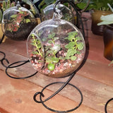 Hydroponics Plant Glass Pot
