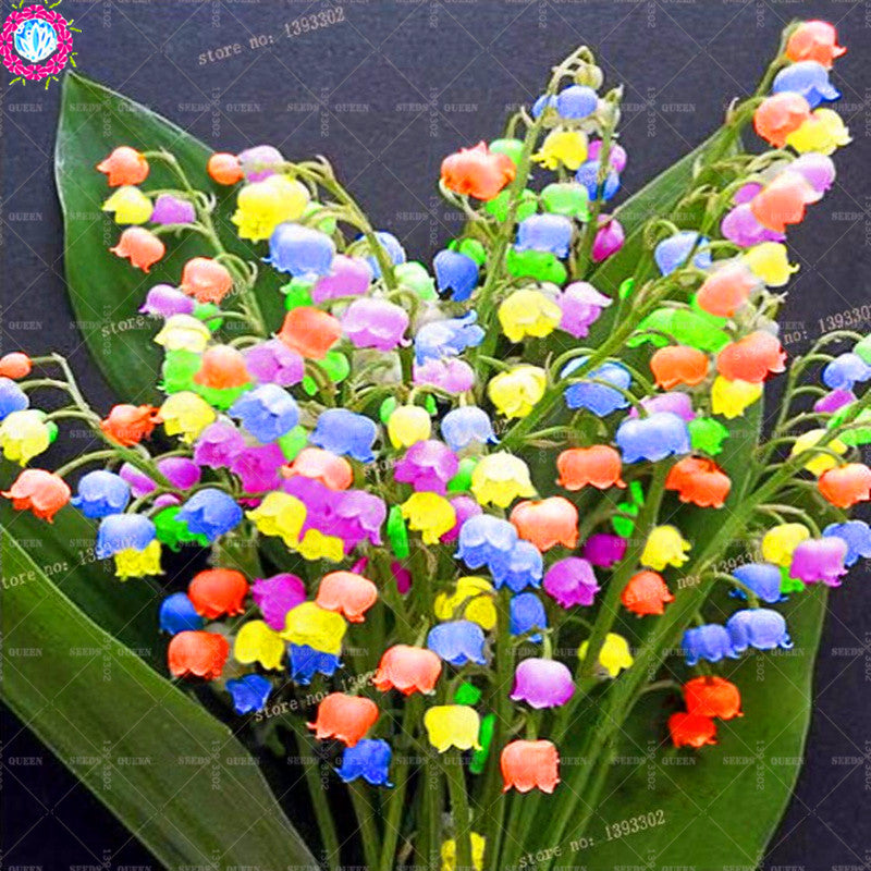 50 Pcs/Bag Lily Of The Valley Flower