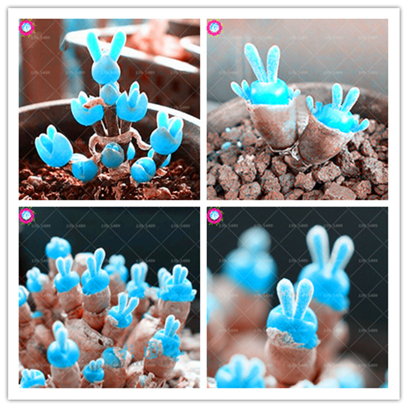 200 pcs Mini Blue Rabbit Bonsai