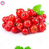 Berry Fruit-200 Pcs