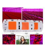 LED COB Chip For Grow Plant
