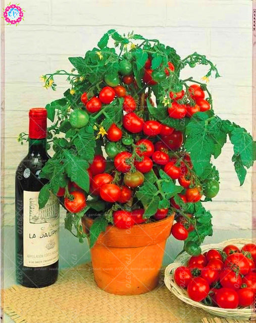 200 Pcs/Bag Tomato Cherry Bonsai