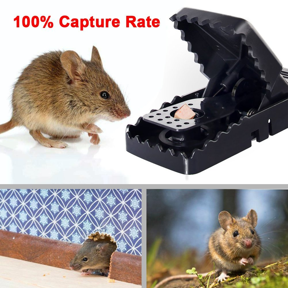 Reusable Plastic Mouse Trap