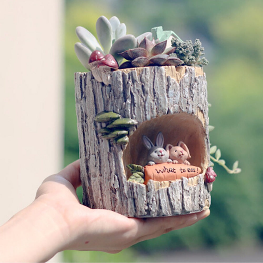 Succulent Plants Pot