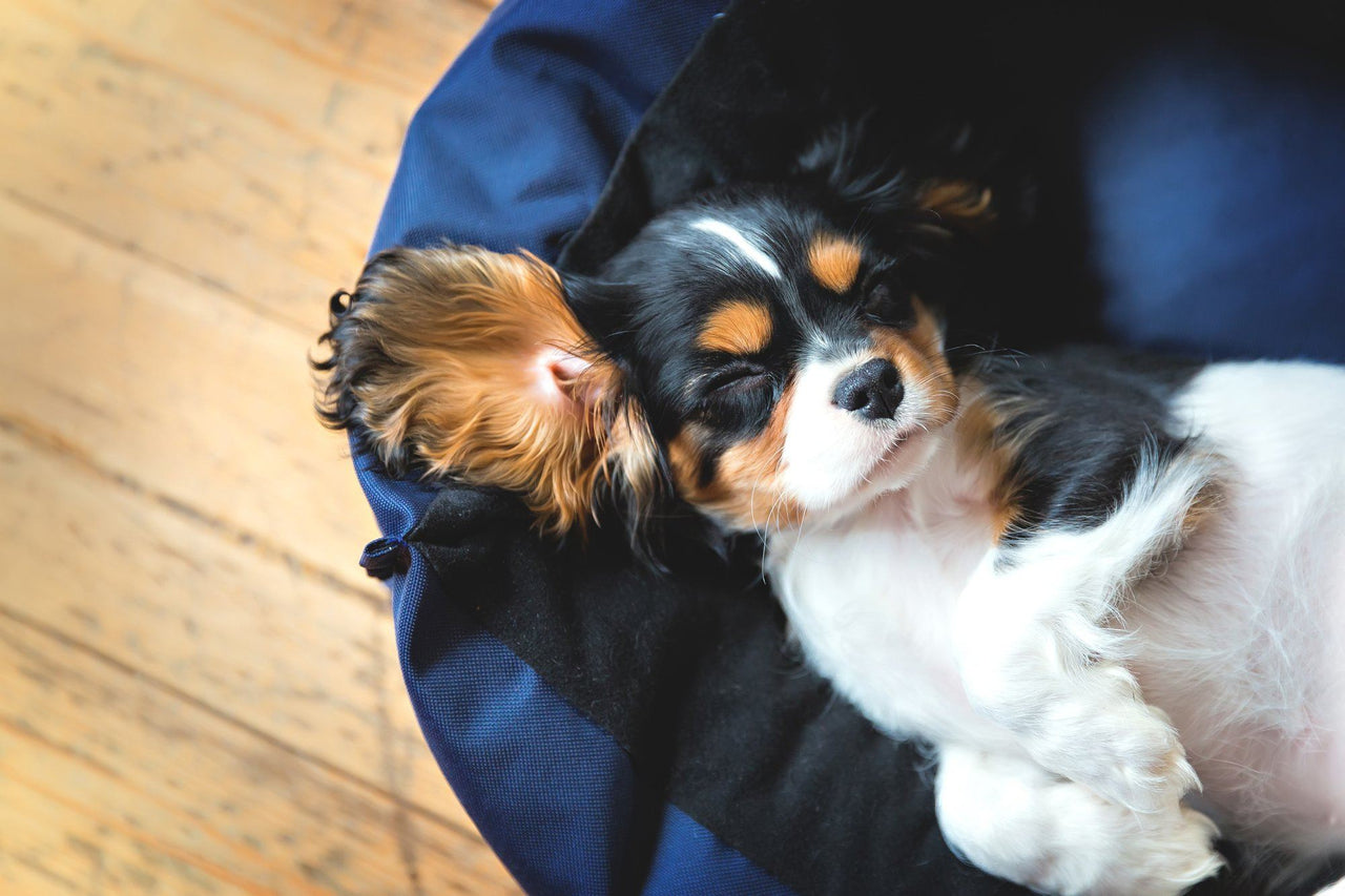 Dogs Should Sleep Well, Too: Guide to the Best Dog Beds