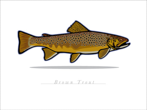 00 Brown Trout Digital Studio Print