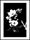 Poster: Apple Blossom, by Discontinued products