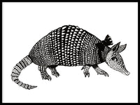 Poster: Armadillo, by Lindblom of Sweden
