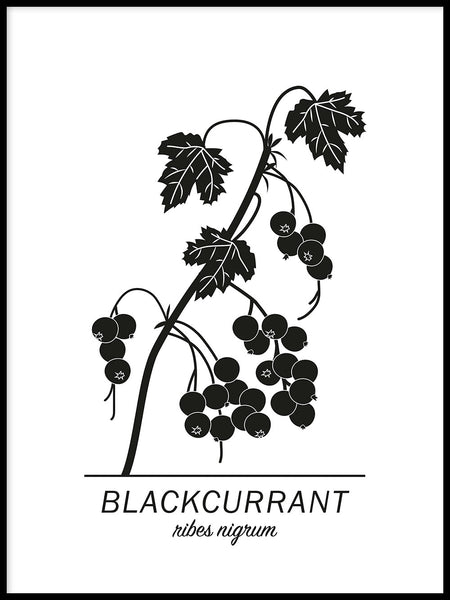 Poster: Blackcurrant, by Paperago