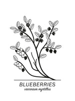 Poster: Blueberries, by Paperago