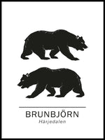 Poster: Brown bear the official animals of Härjedalen, Sweden., by Paperago