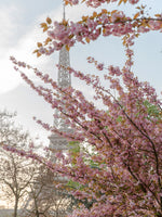 Poster: Cherry Blossom at Eiffel I, by Magdalena Martin Photography