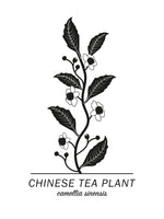 Poster: Chinese Tea Plant, by Paperago