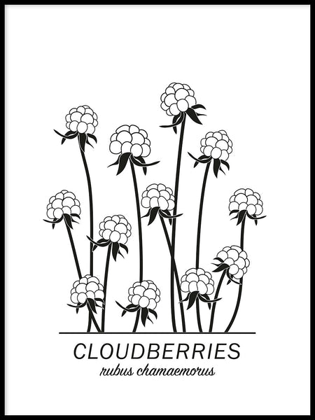 Poster: Cloudberries, by Paperago