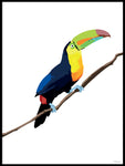 Poster: Colorful Birds #21, by PIEL Design