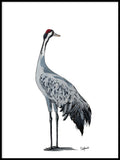 Poster: Common Crane, by Stefanie Jegerings