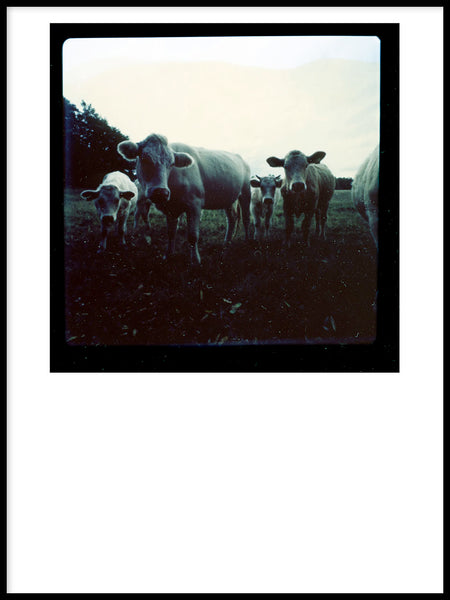 Poster: Cow, by Nils Levin