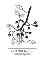 Poster: Cranberries, by Paperago