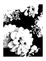 Poster: Dahlia, by Discontinued products