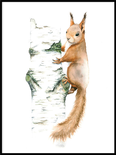 Poster: Squirrel, by Lisa Hult Sandgren