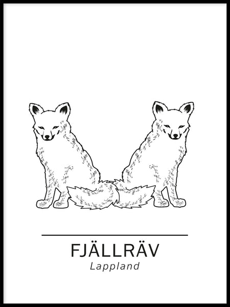Poster: Arctic fox the official animals of Lappland, Sweden., by Paperago