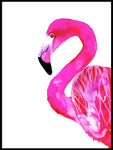 Poster: Flamingo, by Sofie Rolfsdotter