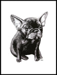 Poster: French Bulldog, by Tvinkla