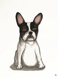 Poster: French Bulldog, by Lindblom of Sweden