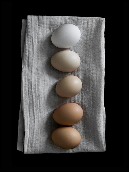 Poster: Eggs, by EMELIEmaria