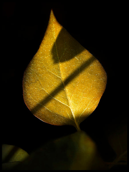 Poster: Golden Leaf, by Susanne Snaar
