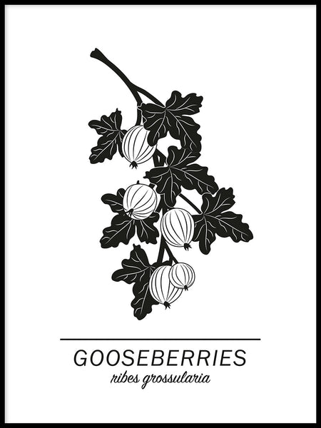 Poster: Gooseberries, by Paperago