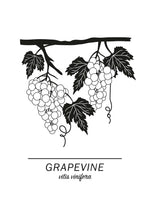 Poster: Grapevine, by Paperago