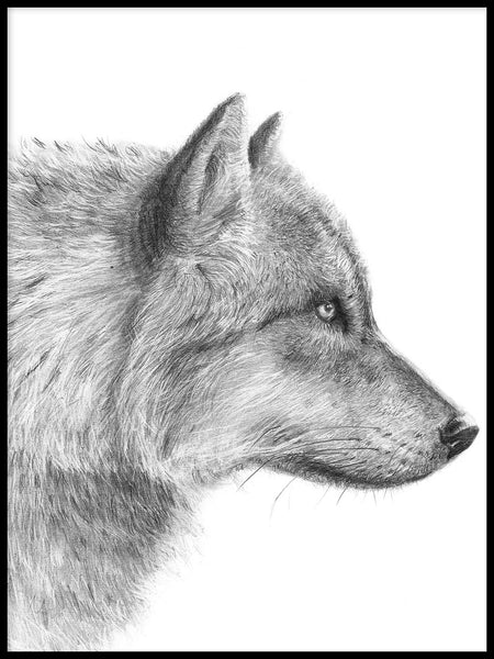 Poster: Grey Wolf - closeup, by Per Svanström