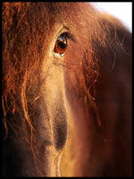 Poster: Eye of the horse, by Linda Forsberg