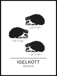 Poster: Hedgehog the official animals of Gotland, Sweden., by Paperago